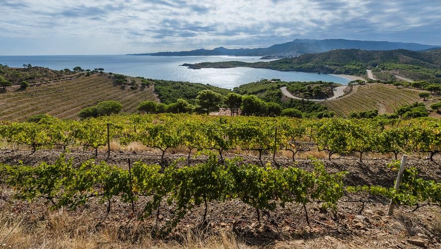 Empordà i Vinyes © Marc Castellet
