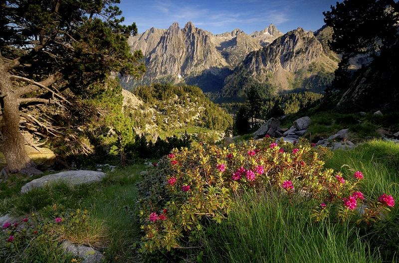 Pirineus-Natura-Parc-Natural-dAigüestortes-i-Estany-de-Sant-Maurici-amb-els-Encantats-als-fons-©-Arxiu-PNAIESM.jpg